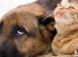 وجود القطط والكلاب