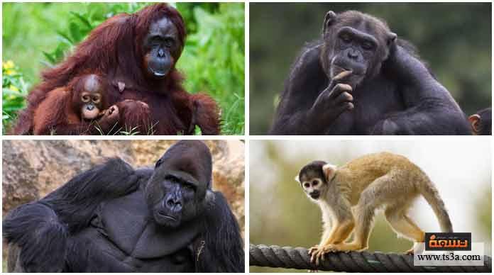 29. أقرب هذه الحيوانات جينيًا إلى الإنسان هو: