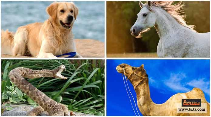 19. أحد هذه الحيوانات لا يمكنه السباحة: