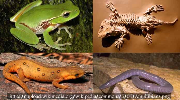 27. الحيوانات البرمائية هي الحيوانات التي ….