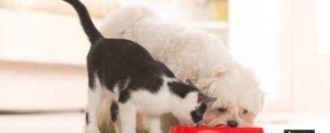 الطعام المناسب للحيوانات الأليفة