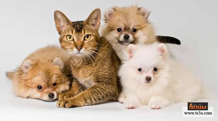 10. القطط والكلاب ترى الأجسام حولها ….