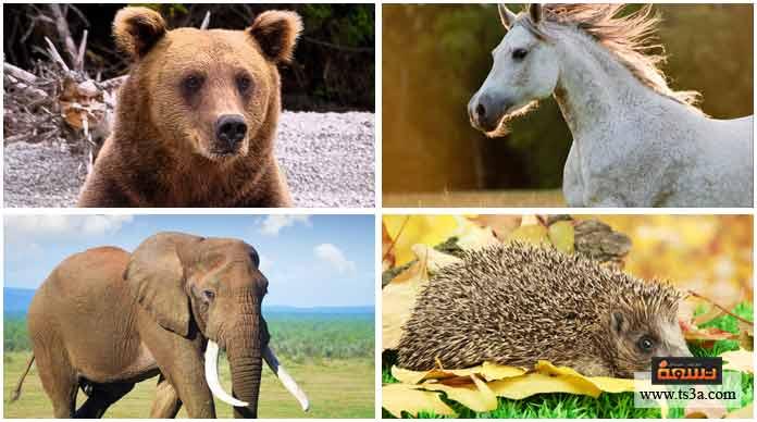 16. أطول الحيوانات الثديية عمرًا من بين هذه الحيوانات هي ….