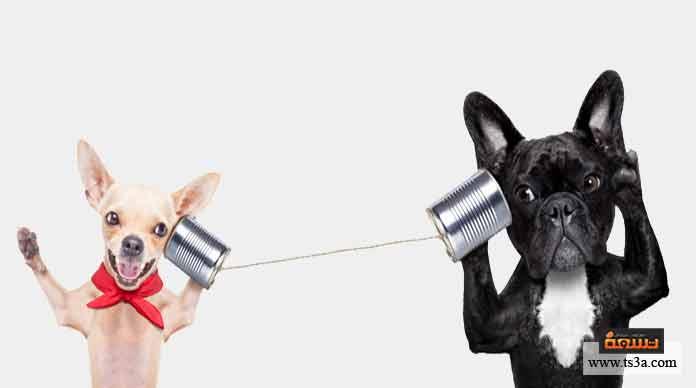 24. تستطيع الكلاب الاستماع إلى الترددات الصوتية …. مقارنة بالإنسان.