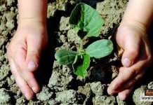 تحفيز الأطفال على حماية البيئة