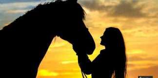 تدريب الأحصنة