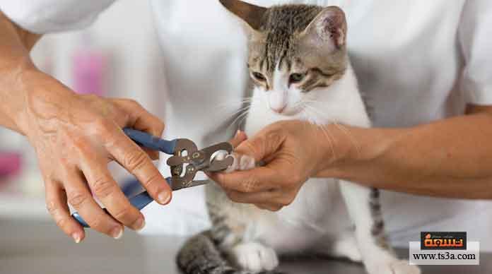 تقليم أظافر القطط