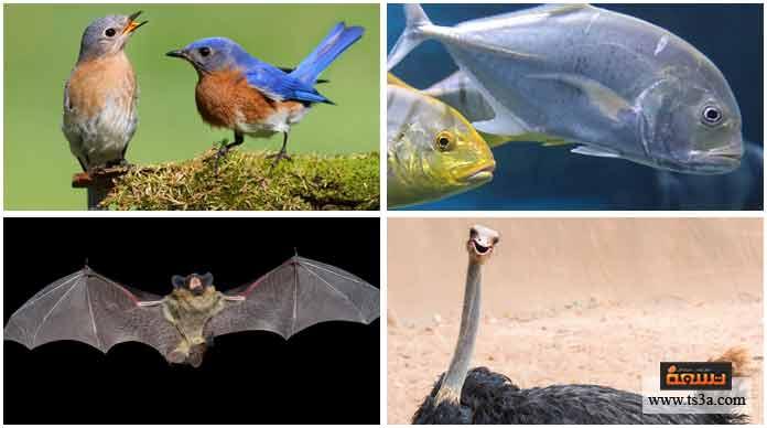 3. أحد هذه الحيوانات لا يبيض: