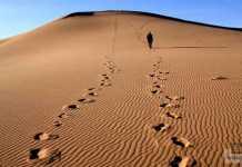العيش في الصحراء