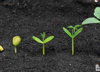 تتكاثر النباتات