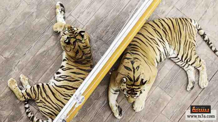 مجموعة صور لل الحيوانات المفترسة الخطيرة
