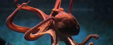 تجنب الحيوانات البحرية الخطيرة