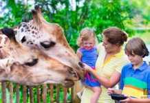 الاستمتاع في حديقة الحيوان
