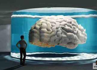 الذكاء الإنساني