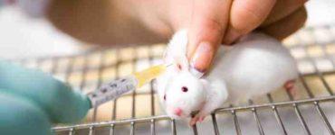 انتقال الأمراض إلى الفئران