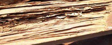 تسوس الأخشاب