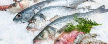 حفظ الأسماك