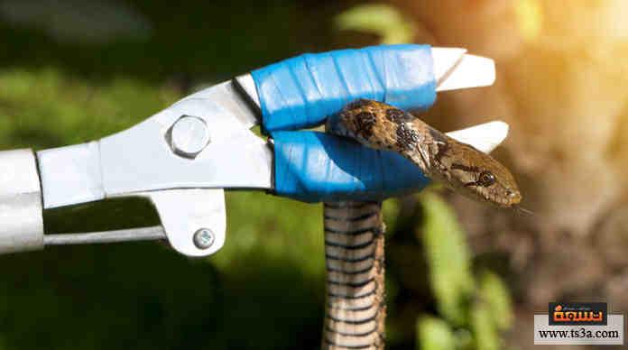 التخلص من الثعابين كيف تتخلص من الثعابين في منزلك تسعة