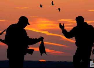 صيد الطيور البرية