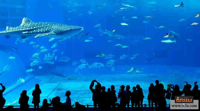 أخطر الكائنات البحرية