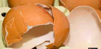 الاستفادة من قشر البيض