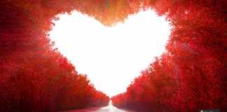 الحب المجرد