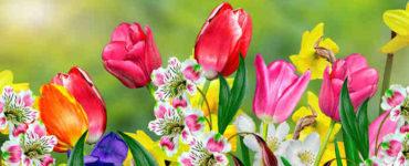 ألوان الزهور