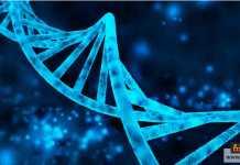 الحمض النووي