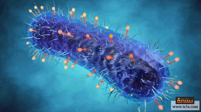الفيروسات المفيدة