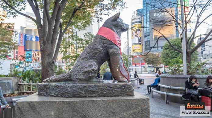الكلب هاتشيكو