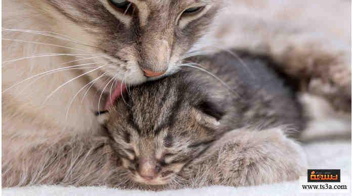 الحيوانات الآكلة لأبنائها