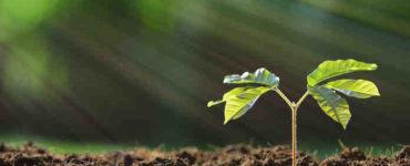 النباتات المتكلمة