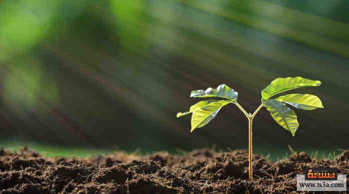النباتات المتكلمة : كيف تتكلم النباتات وتتواصل في ما بينها؟ • تسعة