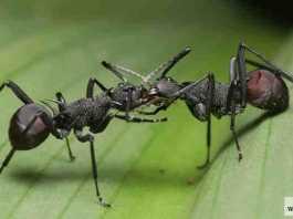 حروب الحشرات