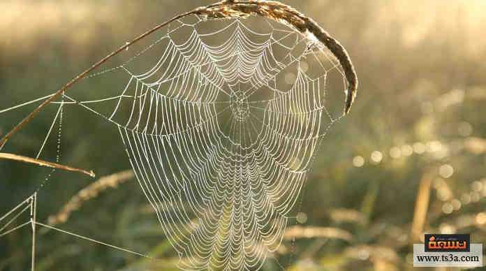 خيوط العنكبوت