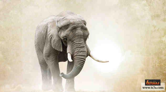 أخلاق الفيلة