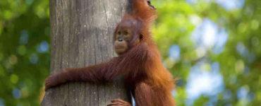 أخلاق القرود