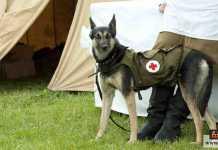 شجاعة الكلاب