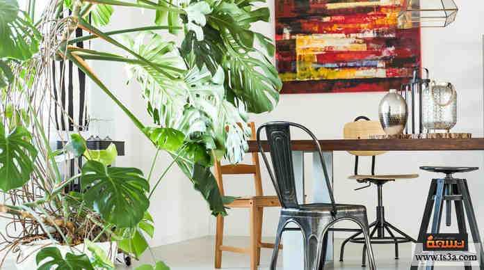 النباتات المنزلية