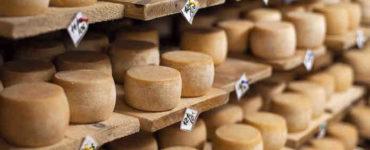 صناعة الأجبان