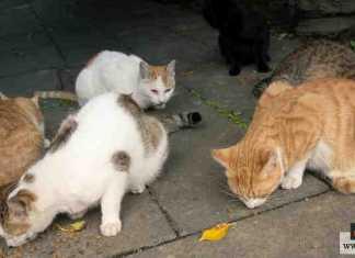 قطط الشوارع