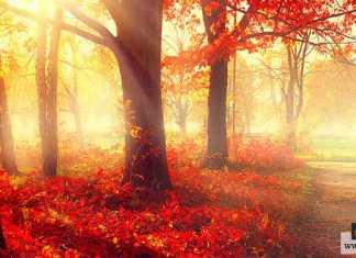 أمراض فصل الخريف