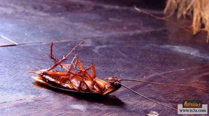 عجينة مكافحة الصراصير