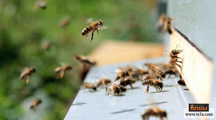 اختفاء النحل