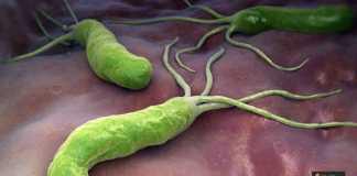 الميكروب الحلزوني
