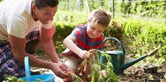 زراعة الأعشاب العطرية