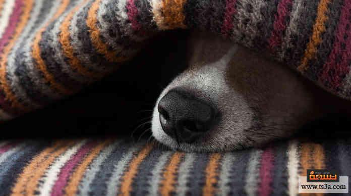 اكتئاب الكلاب
