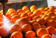 تشميع الخضروات والفاكهة