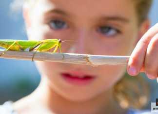 خوف الأطفال من الحشرات