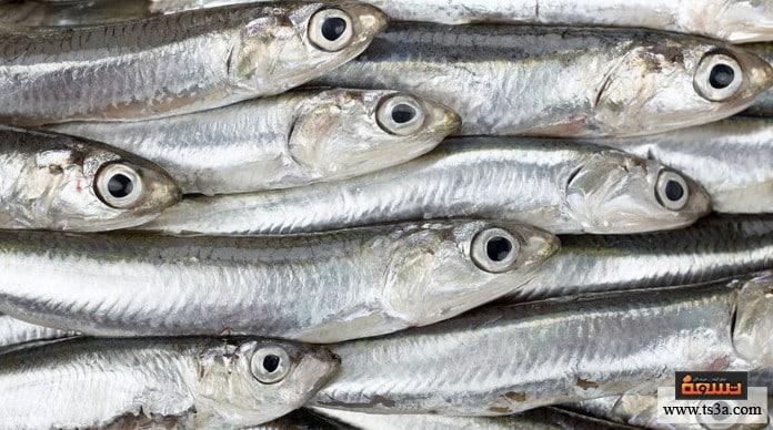 السمك الطازج عيون السمك الطازج